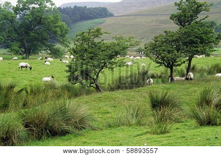 Edale Valley, Peak District UK
