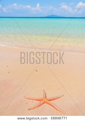 Sea Starlet On a Beach