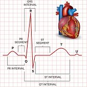stock photo of beating-heart  - Human heart normal sinus rhythm and human heart detailed anatomy - JPG