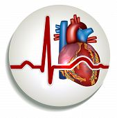 pic of electrocardiogram  - Colorful human heart rhythm icon - JPG