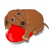Dachshund dog heart