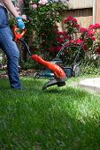 image of electric trimmer  - Woman is trimming her lawn with electric edge trimmer - JPG