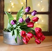 tulips on a wooden board in front of a window pane with bokeh shining through. good for mother's day