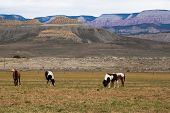 stock photo of horses eating  - Horses on the mountains in the background eating grass - JPG
