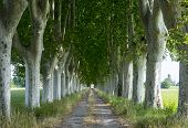 stock photo of row trees  - Country road in Provence near Arles (Bouches-du-Rhone Provence-Alpes-Cote-d