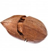 stock photo of pecan  - One Pecan nut close up - JPG