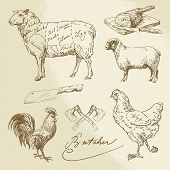 image of meats  - Domestic Animal Meat Diagrams  - JPG