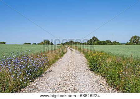 Gravel Road Between Green Fields
