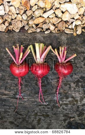 Beets In A Line