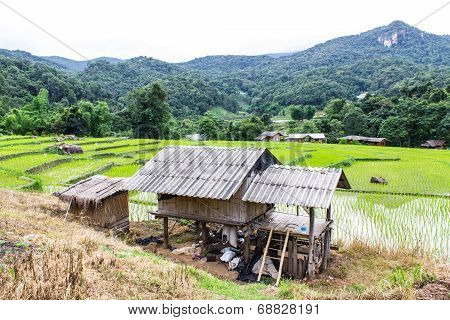 Rice Field Terraces In Doi Inthanon, Ban Mae Klang Luang Chiangmai Thailand