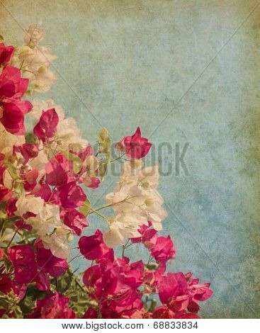 Bush of Bougainvillea flowers    in retro style. Added paper texture