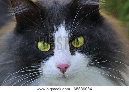 Cat's-eye Close-up