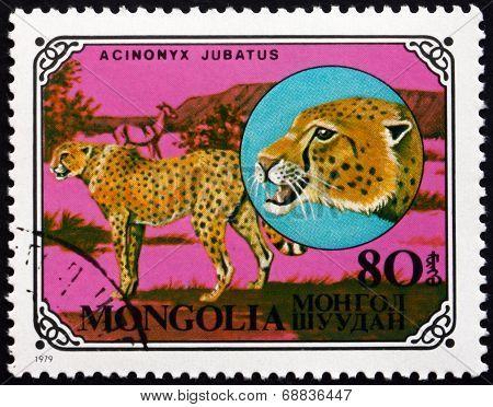 Postage Stamp Mongolia 1979 Cheetah, African Animal