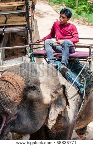 Mahout and his elephant waiting to start the tours with tourist