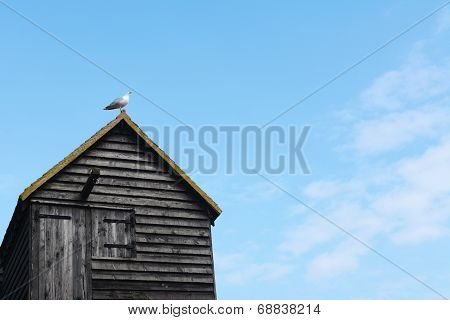 Seagull On The Rooftop Of A Clapboard Fishing Hut