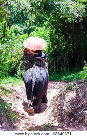 Elephant Trekking Through Jungle In Kanchanaburi, Thailand