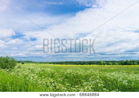 Scenic View Vibrant Springtime