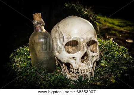 Still Life Human Skull In The Garden