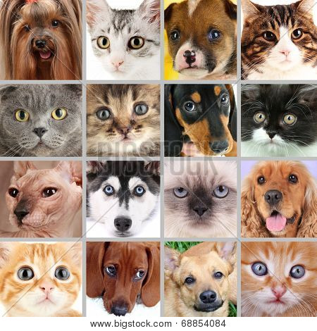 Collage of different cute pets
