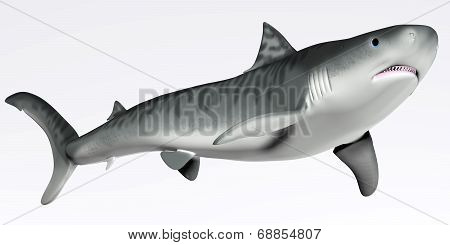 Tiger Shark On White