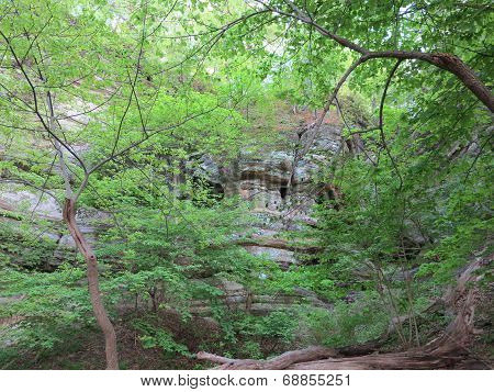 Box Canyon with beautiful spring time tree growth at Starved Rock