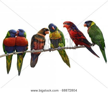 Colorful Parrots(Rainbow Lorikeet), Perching ,Isolated On White Background