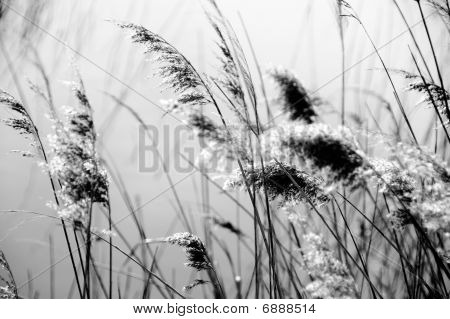 View Of A Relaxing Natural Landscape In Black And White