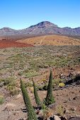 pic of deserted island  - deserted landscape of teide national park on tenerife - JPG