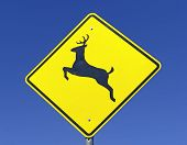 stock photo of caribou  - Driving safety  - JPG