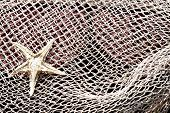 picture of mosquito  - Starfish on a mosquito fishing net background - JPG