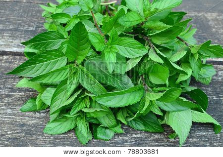 Mentha Pipperita Close Up