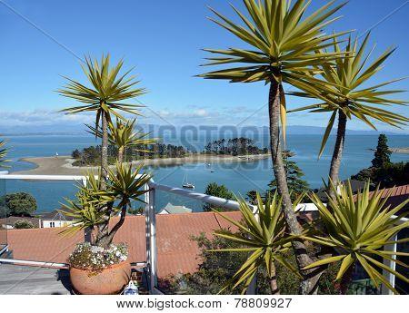 Haulashore Island, Nelson New Zealand