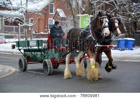 wagon ride pulled by draft horses