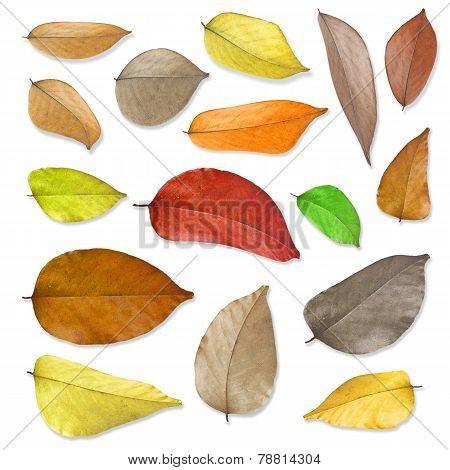Dry Leaves Set .