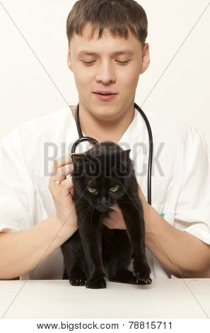 Veterinarian surgeon doctor making a checkup of a black cat