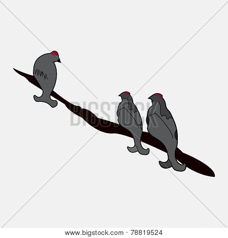 Three Birds Sitting On A Branch