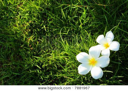 White Flower On Grass Field