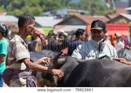 Buffalo Market In Rantepao