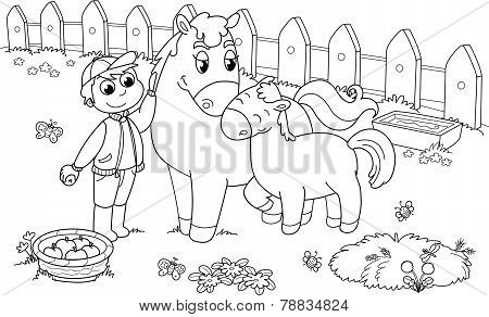 Boy with horse and colt