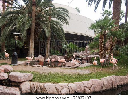 Flamingos At The Flamingo Hotel In Las Vegas