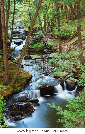 Forest Creek With Hiking Trails