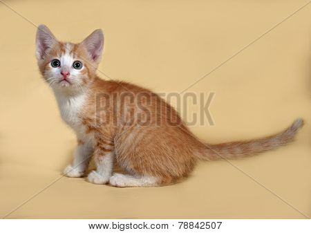 Ginger And White Kitten Sitting On Yellow