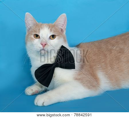 Red And White Cat In Bow Tie Lies On Blue