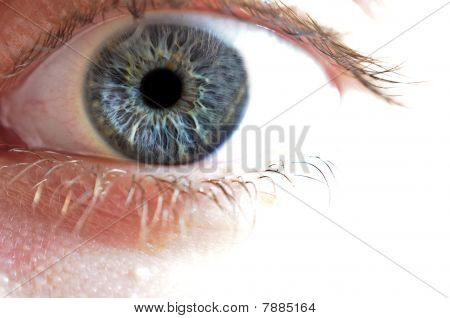 Macro Closeup Of Blue Eye
