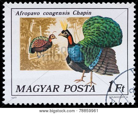 Stamp Series Birds