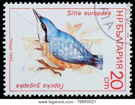 Bird Sitta Europaea