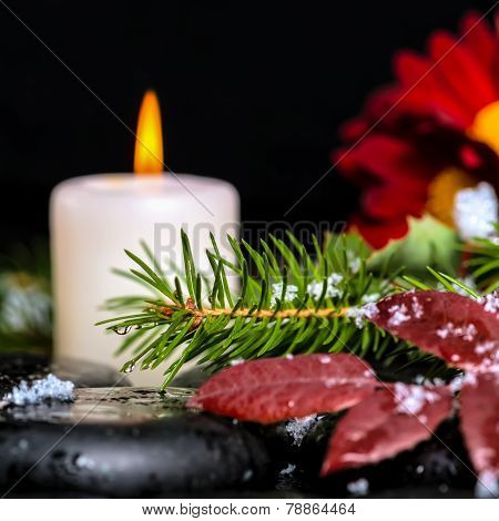 Evergreen Branches With Drops, Leaves,  Snow, Candles And Chrysanthemum On Zen Basalt Stones, Closeu