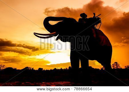 Silhouetted of mahout and elephant