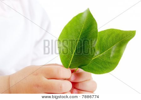 Leaves In Hands