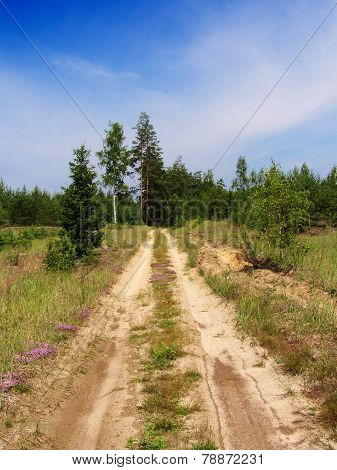 Dirt road in the Russian taiga
